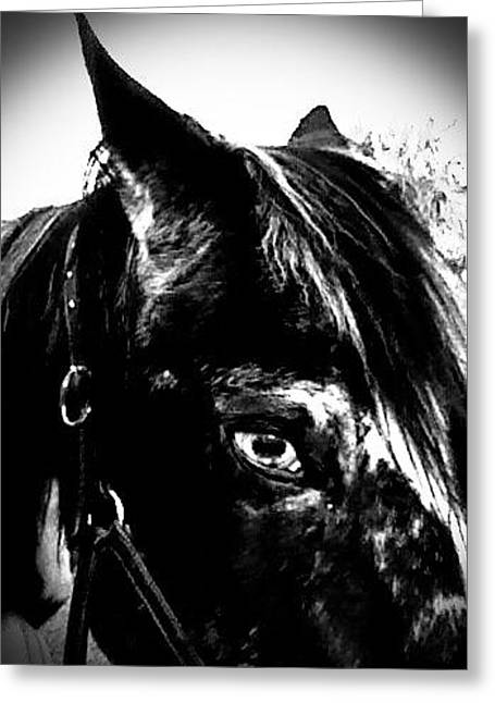 Black And White Baby Greeting Card by Chasity Johnson
