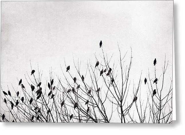 Black And White Birds Greeting Card by Carolyn Cochrane