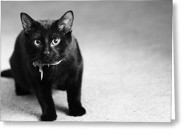 Black And White Cat Greeting Card by Dan Sproul