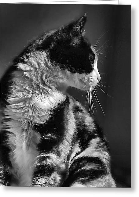 Black And White Cat In Profile  Greeting Card by Jennie Marie Schell