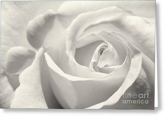 Black And White Curves Greeting Card by Sabrina L Ryan