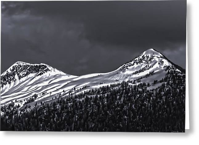 Black And White Deer Mountain  005 Greeting Card by Timothy Latta