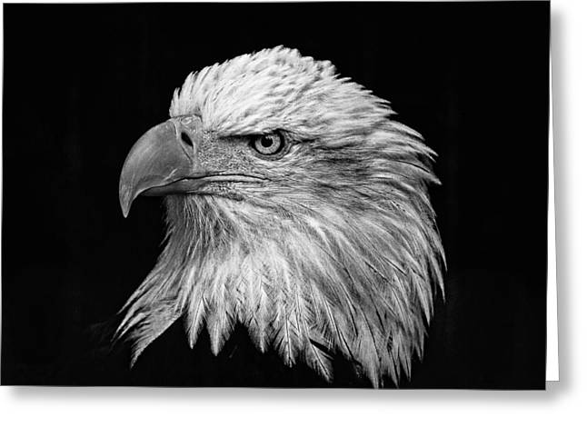 Black And White Eagle Greeting Card by Wes and Dotty Weber