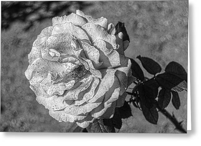 Black And White Flower #2 Greeting Card