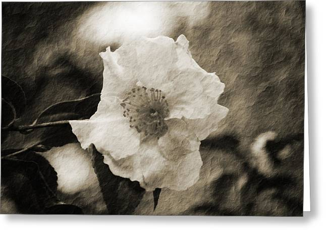Black And White Flower With Texture Greeting Card