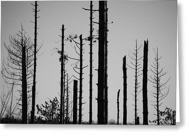 Black And White Forest 1 Greeting Card