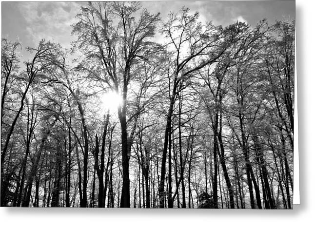 Black And White Forest Greeting Card by Dawdy Imagery