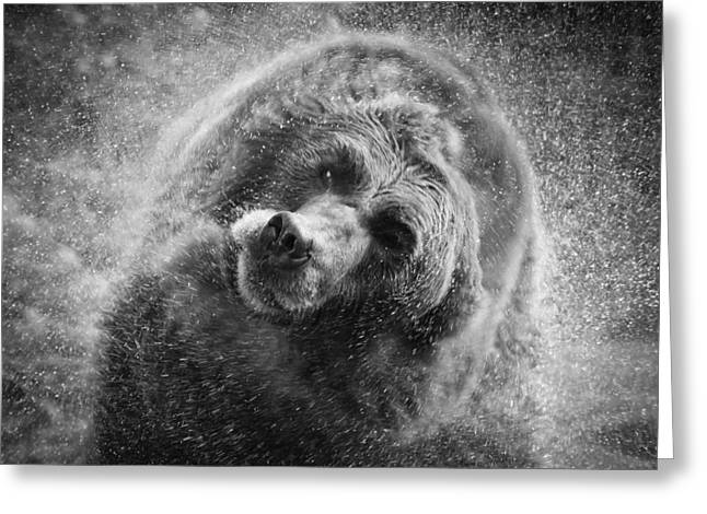 Black And White Grizzly Greeting Card by Steve McKinzie