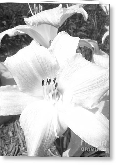 Greeting Card featuring the photograph Black And White Hibiscus  By Saribelle Rodriguez by Saribelle Rodriguez