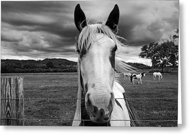 Black And White Horse Greeting Card by Steven  Michael