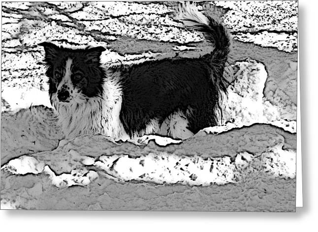 Black And White In Snow Greeting Card by Michael Porchik