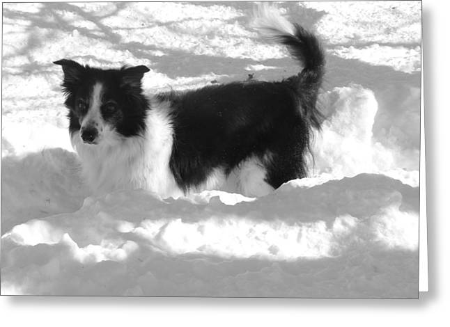 Black And White In The Snow Greeting Card by Michael Porchik