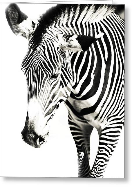 Black And White Greeting Card by Jenny Rainbow