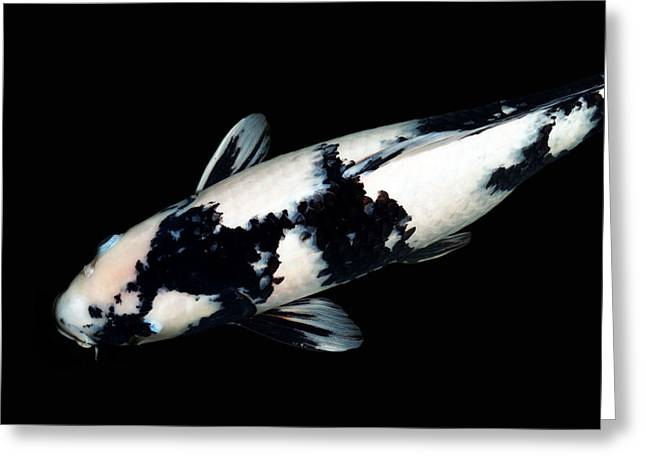 Black And White Koi Greeting Card by Rebecca Cozart