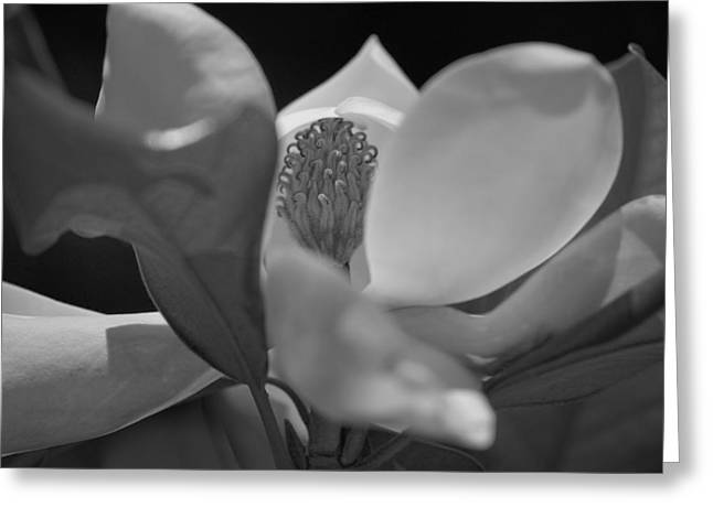 Black And White Magnolia Greeting Card