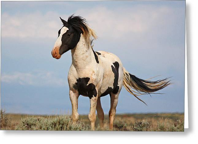 Black And White Mustang Greeting Card
