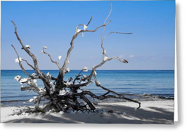 Greeting Card featuring the photograph Black And White On Blue by Phil Abrams