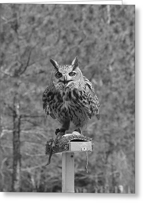 Black And White Owl Greeting Card by Cherie Haines
