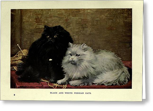 Black And White Persian Cats Greeting Card