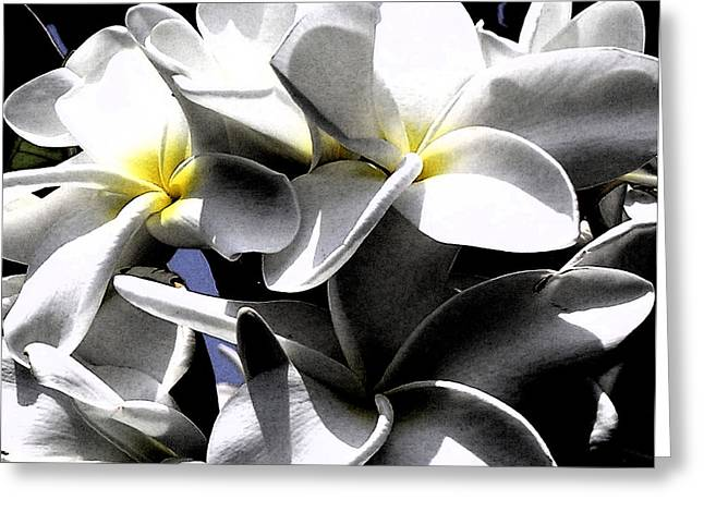 Black And White Plumeria Greeting Card
