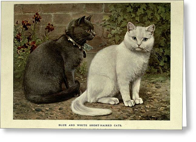 Black And White Short-haired Cats Greeting Card
