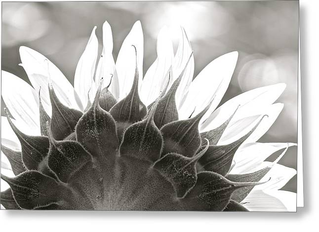 Black And White Sunflower Greeting Card
