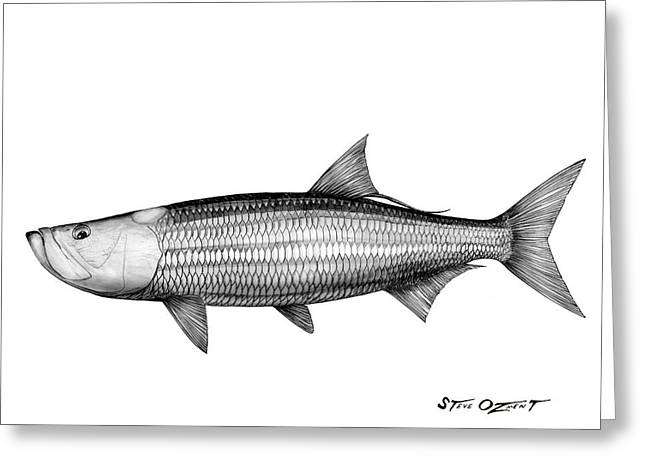 Black And White Tarpon Greeting Card by Steve Ozment