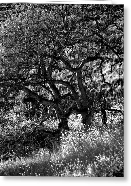 Black And White Trees Greeting Card by Deprise Brescia