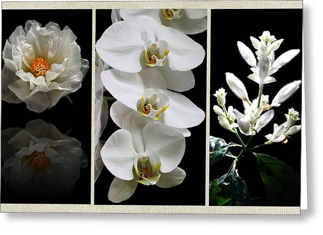 Black And White Triptych Greeting Card