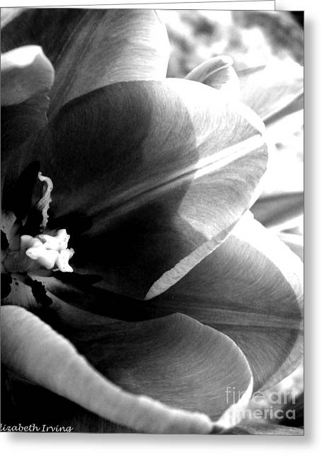 Black And White Tulip Greeting Card by Elizabeth Fredette