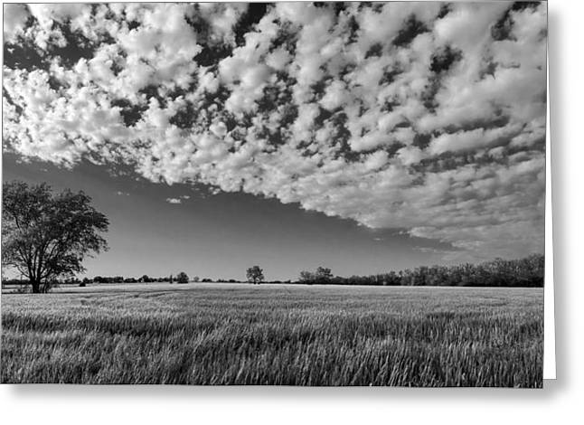 Black And White Wheat Field Greeting Card
