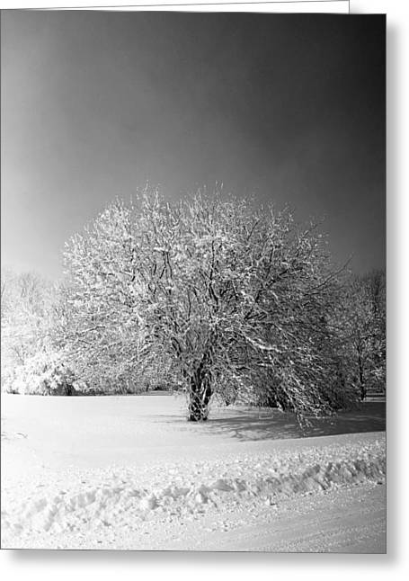 Black And White Winter Greeting Card by Thomas Fouch