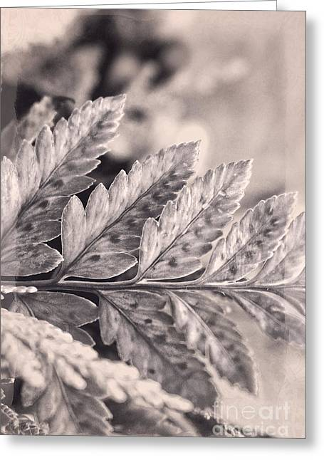 Black And White With Lavender And Cream Greeting Card by Ella Kaye Dickey