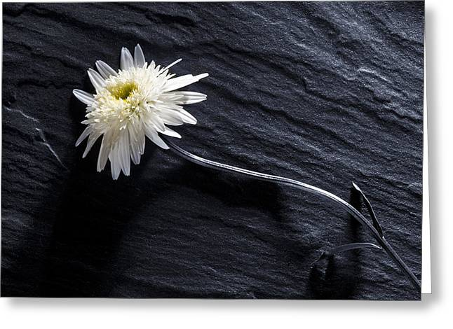 Greeting Card featuring the photograph Black And White With Yellow by Trevor Chriss
