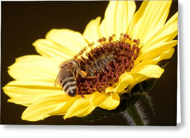 Black And Yellow Bee Beauty Greeting Card