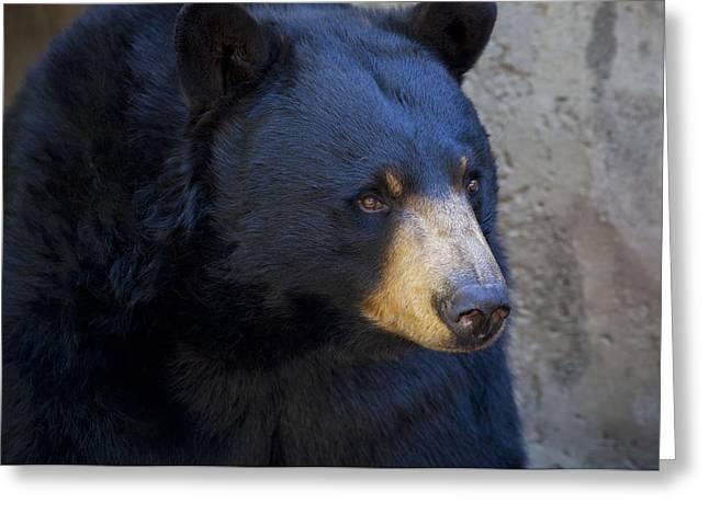 Black Bear 2 Greeting Card by Chris Dutton
