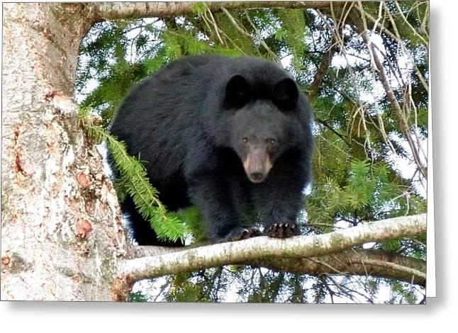 Black Bear 2 Greeting Card