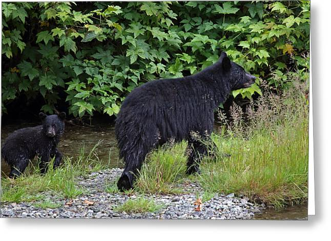 Black Bear And Cub Greeting Card
