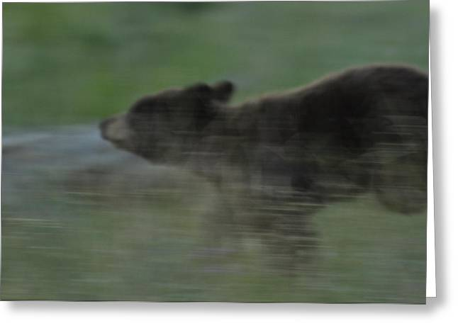 Black Bear Cub Greeting Card