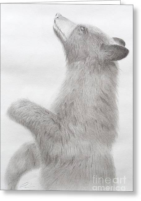 Black Bear Cub Graphite And Charcoal Greeting Card