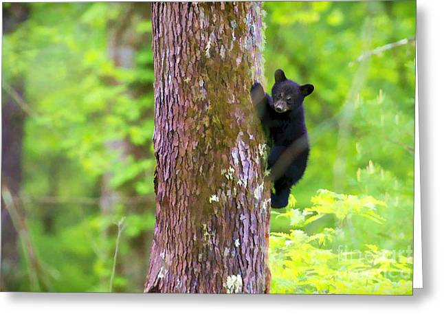 Black Bear Cub In Tree Greeting Card by Dan Friend