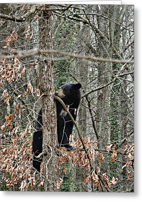 Greeting Card featuring the photograph Black Bear Cub by William Tanneberger