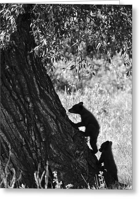 Black Bear Cubs Climbing A Tree Greeting Card