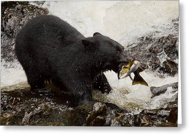 Black Bear Fishing Greeting Card by Stephanie Jurries