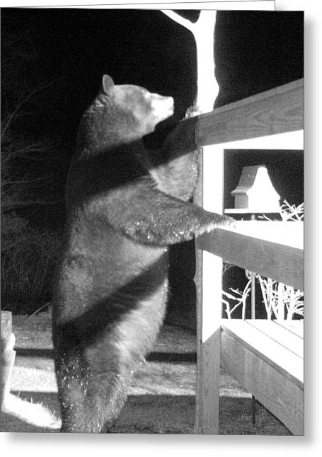 Greeting Card featuring the photograph Black Bear by Mim White