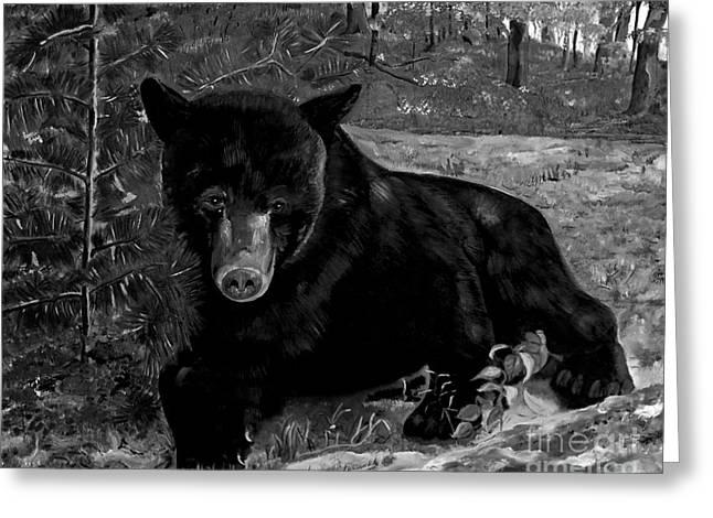 Black Bear - Scruffy - Black And White Greeting Card by Jan Dappen