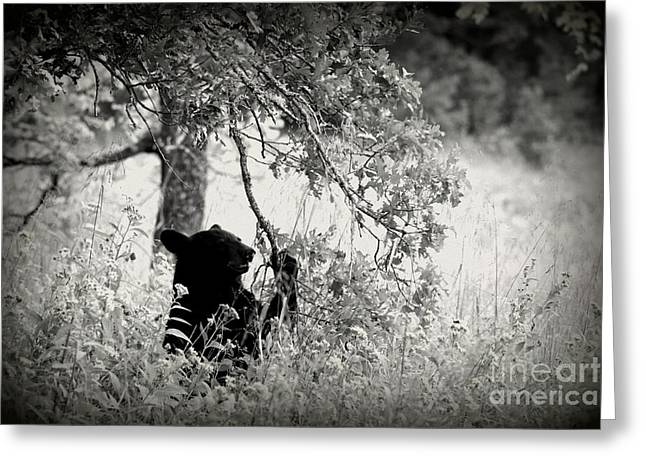 Black Bear Sitting Greeting Card
