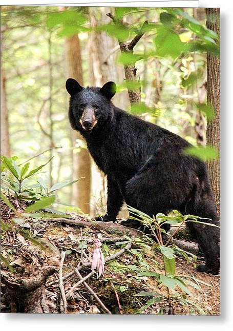 Black Bear Smile Greeting Card