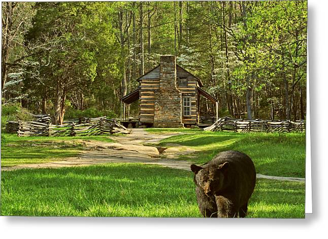 Black Bear Wandering II Greeting Card by TnBackroadsPhotos