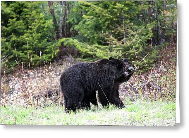 Black Bears Having Fun Greeting Card by Andy Fung